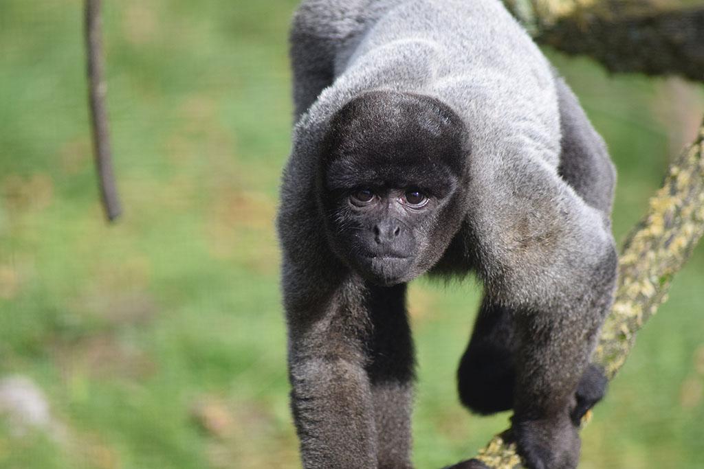 Wild Futures Monkey Sanctuary Looe